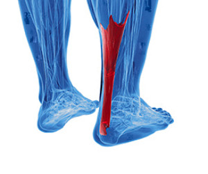 What an Achilles Tendon Injury May Feel Like